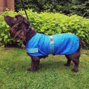 Dog Cooling Coat by PetFace.