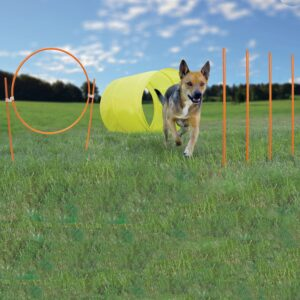 Outdoor Dog Agility Set from K9