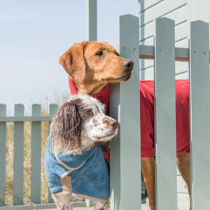 Ruff and Tumble Classic Dog Drying Coats – 100% Cotton.