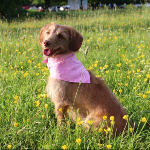 Aquamat Pink Dog Cooling Chiller Bandana