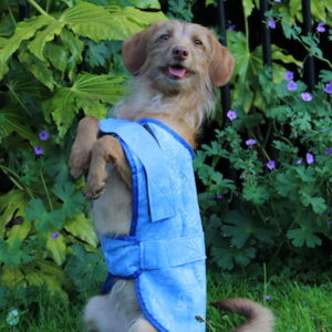 Aquamat Blue Dog Cooling Chiller 'Chien' Coat, Jacket