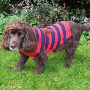 Robin Christmas Dog Jumper by PetFace
