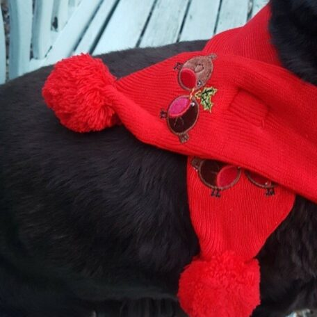 red xmas dog scarf 6