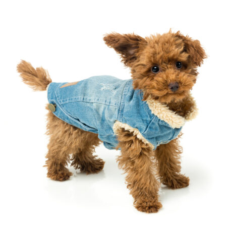 FZA271-7_Jacket_Rebel_Dog_2