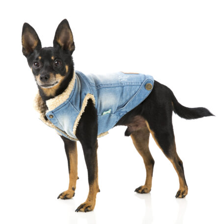 FZA271-7_Jacket_Rebel_Dog_4
