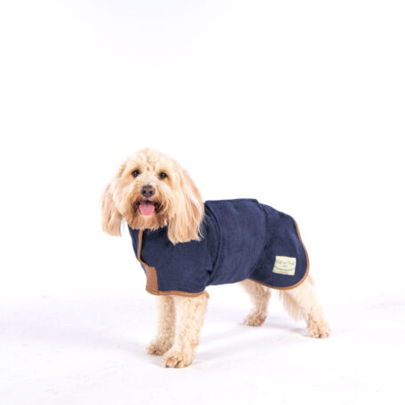 Ralphy - Cockapoo - M-1431-Edit-14
