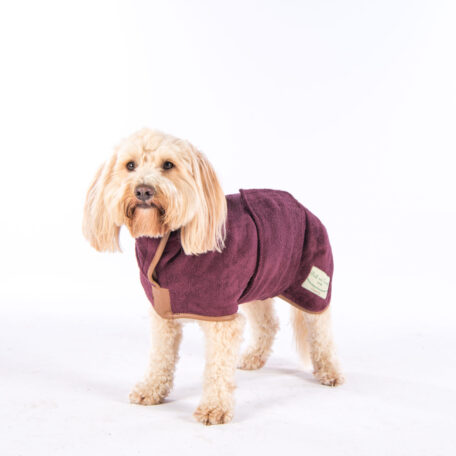 Ralphy - Cockapoo - M-1467-Edit-18