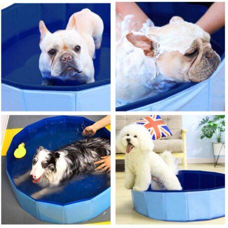 PJ10469 Pet Swimming Pool Lifestyle